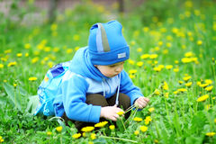 Boy gathers a bouquet of flowers for mom Royalty Free Stock Images