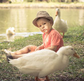 Boy and geese Stock Image