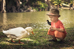 Boy and geese Stock Photo