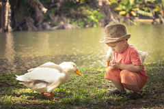 Boy and geese Royalty Free Stock Photo