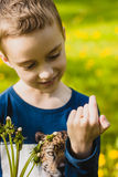 Boy gently holding ladybug Royalty Free Stock Image