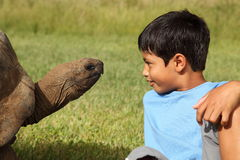Boy and giant tortoise Stock Images