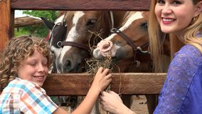 Boy and girl at animal farm stock video
