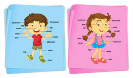 Boy and girl with different body parts Stock Photo
