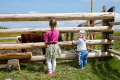 Boy and a girl enjoying outdoors, observing cows on a farm stock image