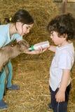 Boy and girl feeding bay goat Stock Images
