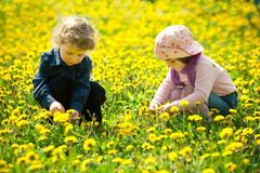 Boy and girl in flowers Stock Photo