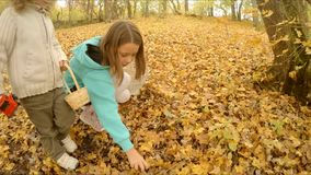 Children gather mushrooms, truffles. A boy and a girl gather mushrooms in an autumn forest. Looking for foliage truffles stock footage