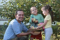 The kids help dad harvest apples. Boy and girl help dad pick apples Royalty Free Stock Photography