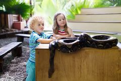 Boy and girl hold and feed python snake at zoo. Boy and girl hold and feed huge python snake at day trip to zoo. Preschooler kid watching wild animals in Royalty Free Stock Images