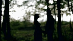 Boy and girl kissing in the woods. Couple kissing in the park at sunset. Photo in multicolor image style stock video footage