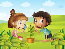 Boy and girl looking at ladybug on leaf Royalty Free Stock Image