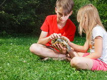 Boy and girl observing turtle outdoor Royalty Free Stock Photos