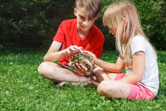 Boy and girl observing turtle outdoor Stock Photo