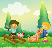 Boy and girl playing with dogs in the park Stock Photos