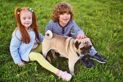 Boy and girl playing in park on grass with dog of pug breed. Two children boy and girl playing in park on grass with dog of pug breed Royalty Free Stock Photography