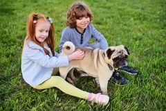 Boy and girl playing in park on grass with dog of pug breed. Two children boy and girl playing in park on grass with dog of pug breed Royalty Free Stock Image