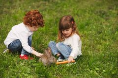 Boy and girl playing with rabbit in park Stock Photography