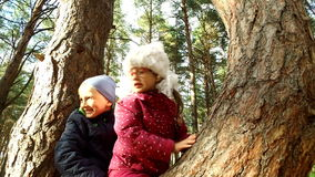 Boy and girl sitting on a large tree. The children have planted on pine tree and they are happy. Sunday holiday with stock video footage