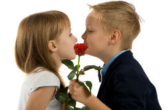 Boy gives a girl flowers. boy kisses a girl Stock Images