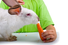Boy gives the rabbit a carrot Royalty Free Stock Photo