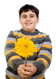 Boy giving flower Royalty Free Stock Photo