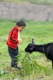 Boy and goat Royalty Free Stock Photo