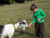 Boy and goat Royalty Free Stock Photos