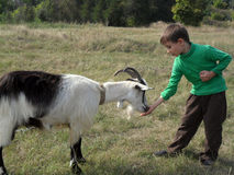 Boy and goat Stock Images