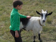 Boy and goat Royalty Free Stock Images