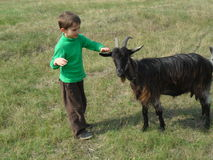 Boy and goat Royalty Free Stock Photography