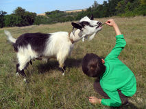 Boy and goat Stock Image