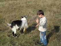 Boy and goat Stock Photos