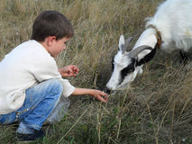 Boy and goat Stock Photo