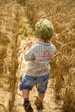 Boy goes on a field of rye Royalty Free Stock Photo