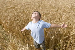 Boy in the golden field. Stock Images