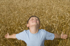 Boy in the golden field. Royalty Free Stock Image