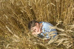 Boy in the golden field. Royalty Free Stock Images