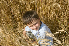 Boy in the golden field. Royalty Free Stock Photography