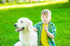 Boy with golden retriever dog blowing dandelion.  royalty free stock photos