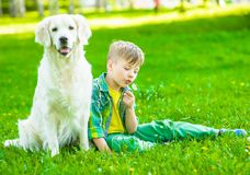Boy with golden retriever dog blowing dandelion.  stock photos