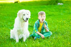 Boy with golden retriever dog blowing dandelion.  royalty free stock images