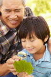Boy and grandfather examining leaf Stock Photos