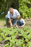 Boy With Grandfather Gardening Royalty Free Stock Photo