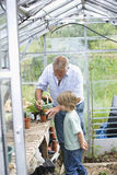 Boy With Grandfather Planting In Greenhouse Stock Image