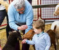 Boy and Grandmother Feeding Animals. A grandmother helps her grandson feed farm animals at a fall fair stock image