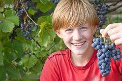 Boy with grape Royalty Free Stock Photos