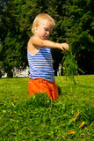 Boy in the grass. A boy collects the grass on the green lawn Royalty Free Stock Photo