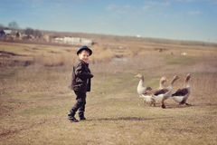 The boy grazes geese Stock Photos