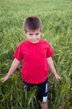 Boy on a green field of wheat Stock Image